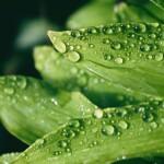 olivia-basile-RcciIaxiNus-unsplash