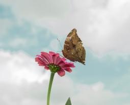 Neue Papillon-Gruppe in Schaffhausen
